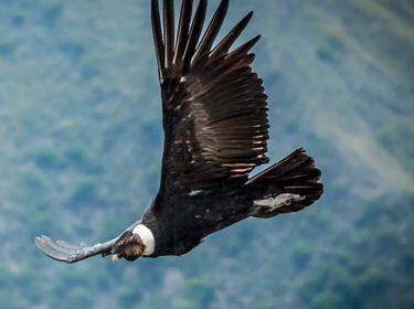Condors, Titicaca y Cusco (CTC)